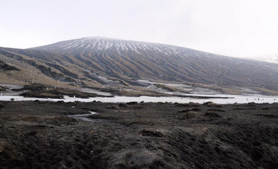 Vulkanische Inseln bilden einen guten Brutplatz aufgrund der reduzierten Schneedecke und genügend Nahrung im umliegenden Meer, wie beispielsweise rund um die Südsandwichinseln. Doch die Bedrohung durch Ausbrüche liegt immer drohend über den Kolonien. Bild: Michael Wenger