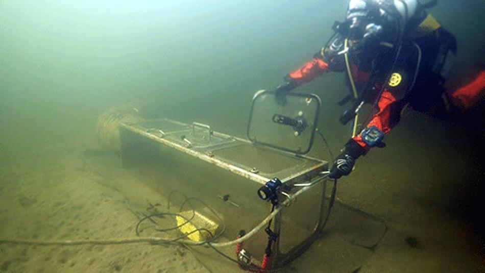 Ein Taucher testet einen der Kammern in den kalten Gewässern Tasmaniens bevor sie an der Küste Antarktikas eingesetzt werden. Foto: Jonny Stark