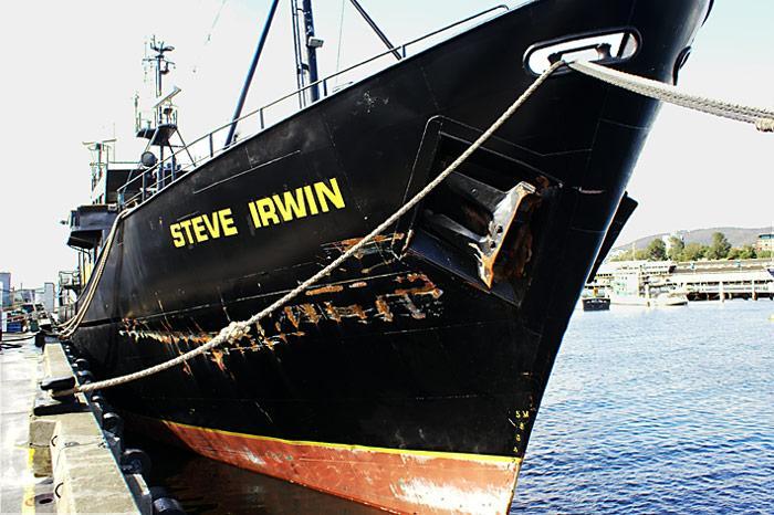 Steve-Irwin