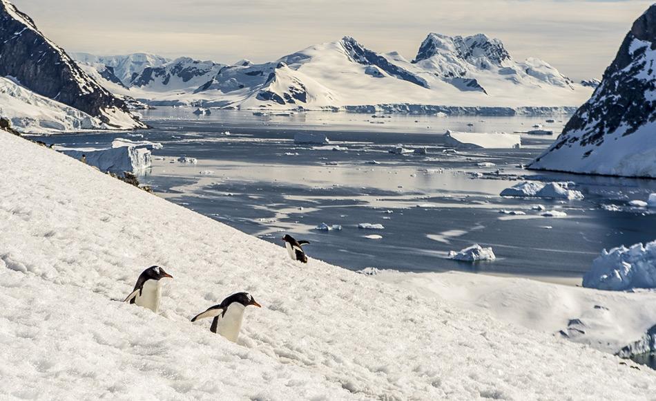 Die Antarktis ist die Heimat vieler Pinguin- und Walarten und das Rossmeer gilt als eines der unberührtesten Meeresgebiete der Welt. Auf ihrer Jahrestagung in Hobart hat die Kommission zur Erhaltung der lebenden Meeresschätze der Antarktis endlich dem Vorschlag für ein Meeresschutzgebiet im Bereich des Rossmeeres zugestimmt. Bild: Katja Riedel
