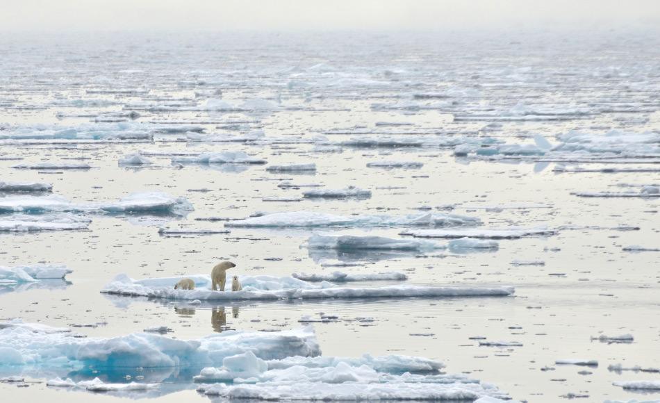Der Arktische Ozean mit seinen 14 Millionen km2 ist der kleinste der Ozeane und wird von 7 Ländern umringt. Obwohl er bis zu 5669 m tief ist, besteht er aus vielen Schelfgebieten und ist daher durchschnittlich nur 987 m tief. Trotzdem ist er die Heimat von unzähligen Organismen. Bild: Michael Wenger