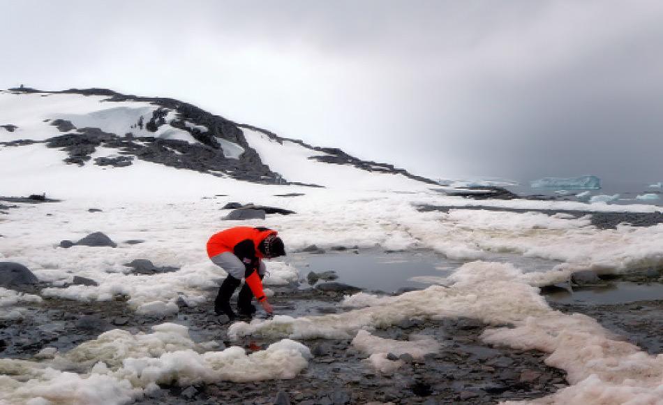 Die Geowissenschaftlerin Julia Kleinteich entnimmt Proben aus Süsswassertümpeln mit Mikroben drin in der Antarktis. Bild: Daniel Farinotti
