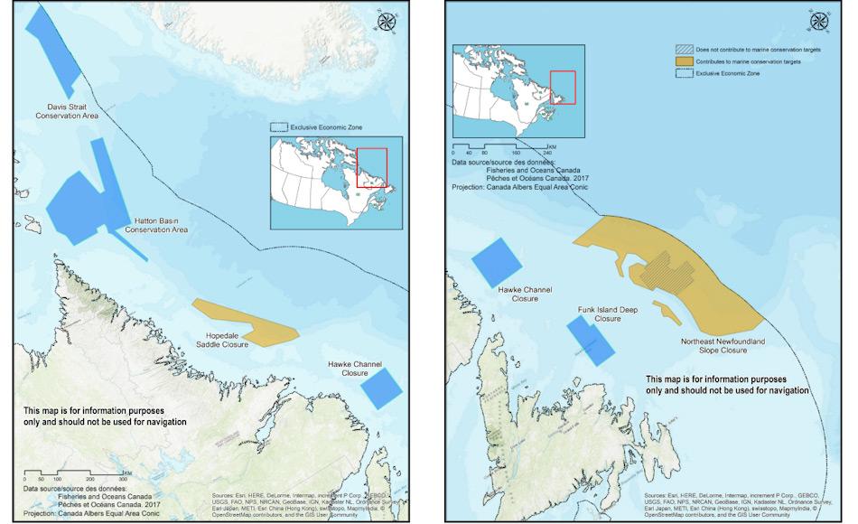 Die sieben neuen Meeresreservate liegen an der kanadischen Ostküste und zählen zur arktischen Küste. Von Wirbellosen wie Schwämmen bis zu mysteriösen Narwalen leben in diesen Regionen. Bild: Fisheries and Oceans Canada
