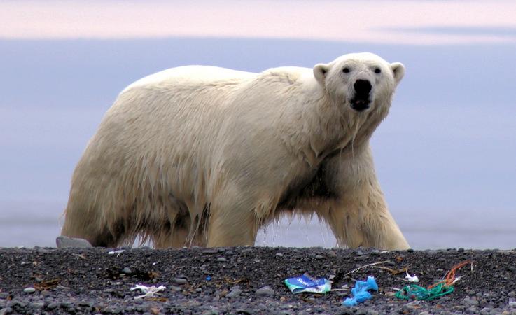 Plastikmüll in der Arktis ist ein enormes Problem. Meist wird der Müll angeschwemmt und wird am