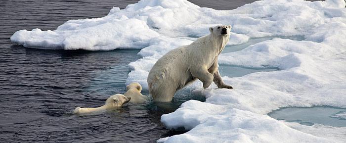 Eisbärin mit Nachwuchs