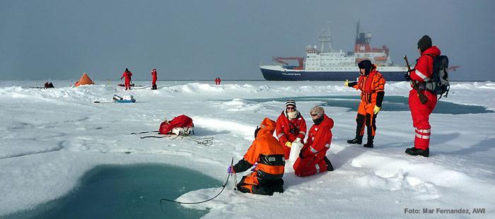Mehrere Gruppen knüpfen sich den Lebensraum Meereis bei jeder Eisstation vor. Wasserproben aus den Schmelztümpeln, das Eis selber sowie das Wasser darunter, alles wird nach Pflanzen, Tieren und Mikroorganismen durchsucht.