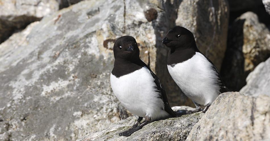 Vor ihrer Bruthöhle beobachten die Vögel vorerst mal die Umgebung.