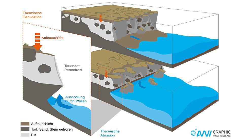 Die Wellen graben tiefe Nischen in die Sockel der Steilküsten. Die Folge: Die unterspülten Hänge brechen Stück für Stück ab.