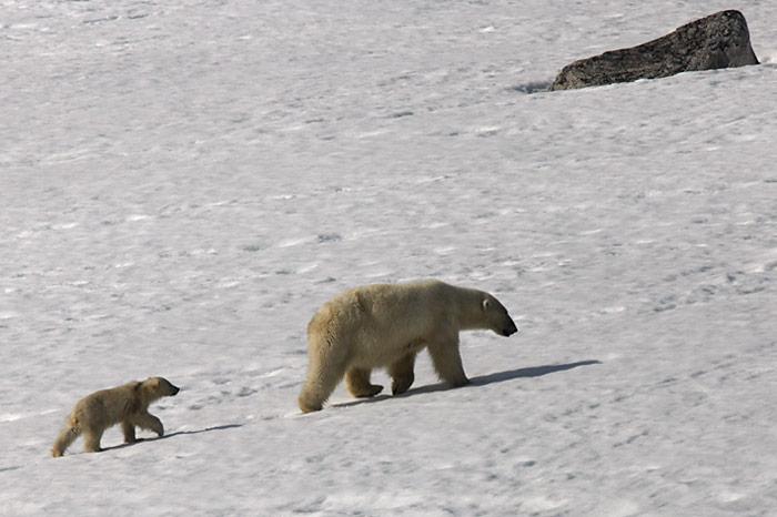 010_spitzbergen_2010