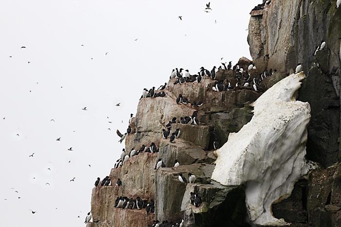 018_spitzbergen_2010