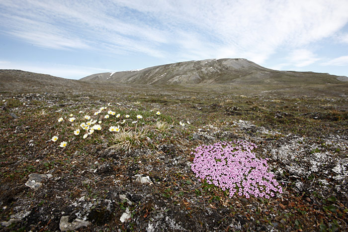 026_spitzbergen_2010